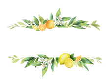 Watercolor Vector Banner Of Citrus Fruits And Leaves.