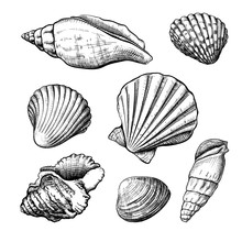 Set Of Different Shapes Of A Seashells Isolated On A White Background. Hand Drawn Sketch. Vector Illustration