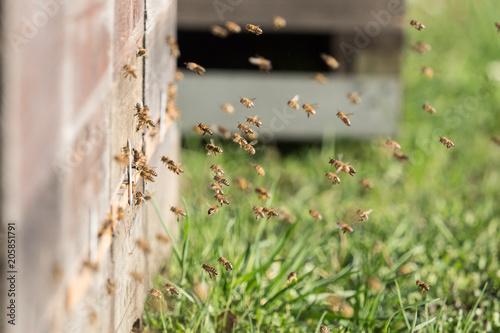Honigbienen an der Beute