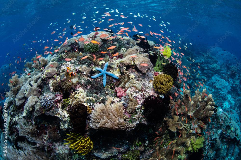 Fototapety, obrazy: Vibrant Coral Reef Near Alor, Indonesia