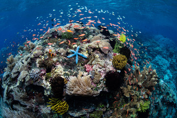 Vibrant Coral Reef Near Alor, Indonesia