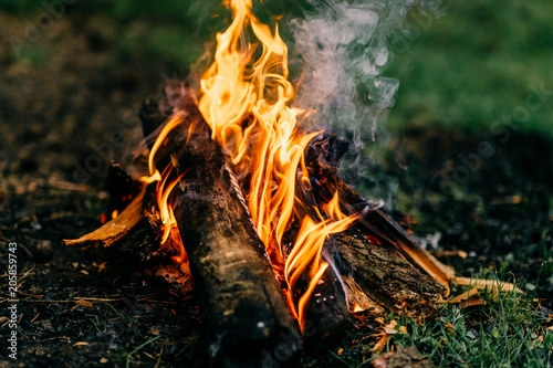 Fotografiet  Burning firewood in outdoor summer camp on green abstract background