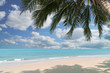 Beautiful tropical beach with coconut palm at summer time