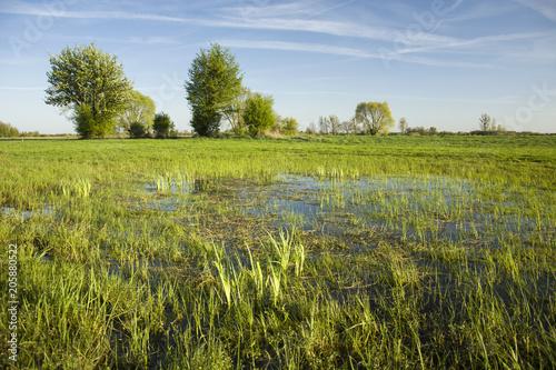Foto op Canvas Pistache Wet meadows, trees and blue sky