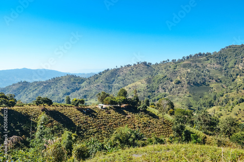 Foto op Plexiglas Pistache Landscape of forest and mountain with blue sky