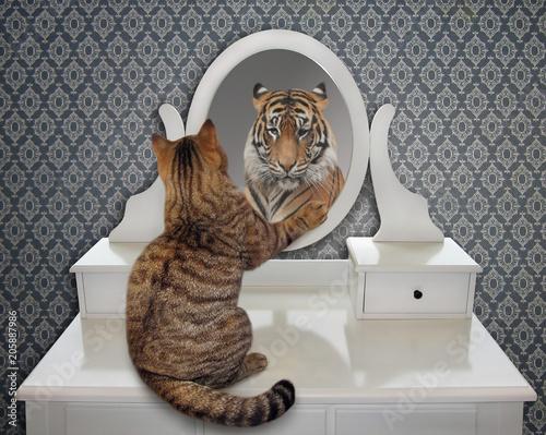 Fototapeta premium Kot patrzy na swoje odbicie w lustrze. Widzi tam tygrysa.