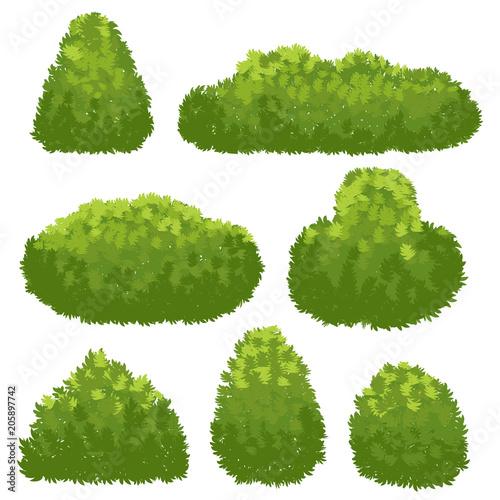 Fotografia, Obraz Nature hedge, garden green bushes