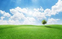 Single Tree On Green Grass Field Against Blue Sky A Nature Concept