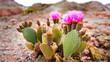 Leinwandbild Motiv prickly pear cactus flower