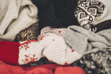 Cute Funny Tabby Cat Hiding In Sweaters, Space For Text. Kitty Maine Coon With Adorable Eyes In Pile Of Clothes In Warm Home. Playful Fun Moments