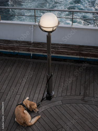 Leinwand Poster Dog attached to a lamp post on a ferry deck
