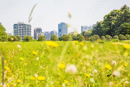 Fotobehang Zwavel geel 東京都市部の自然