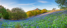 Bluebell Panorama Below Rosebe...