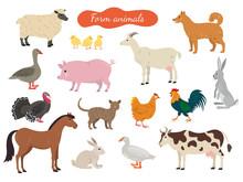 Set Of Farm Animals On White Background.