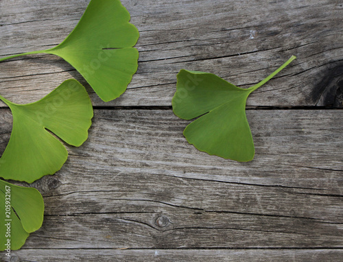 Fotografia  Green ginkgo biloba leaves isolated on wood background.