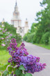 A branch of blossoming lilac, Soviet sort, Moscow State University background