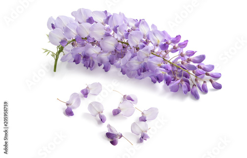Recess Fitting Orchid Wisteria flowers isolated