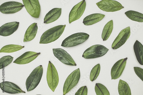 Fototapety, obrazy: Green leaves arranged on a white background. Lay flat background