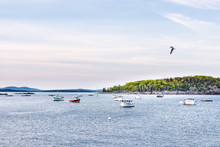 Sunset In Bar Harbor, Maine Village With Empty Moored Boats In Water, Seagull Bird Flying Above Marina