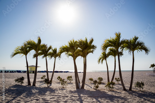 Palm Trees on St. Pete beach Canvas Print
