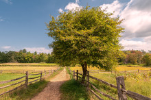 Crab Apple Tree In A Field With A Dirt Path Bordered By A Split Rail Fence