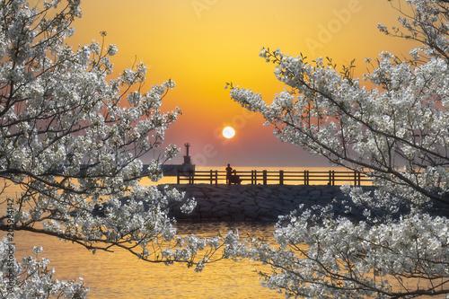 Fotobehang Zen 惜春
