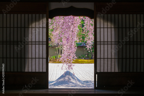 Foto op Plexiglas Kersenbloesem 京都 高台寺の枝垂れ桜