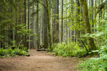 opening in the forest with flat ground and surrounded by cedar trees