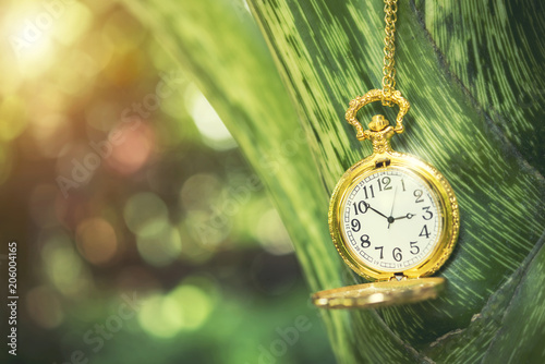 Leinwand Poster  Closeup golden rocket watch hanging on tree branch with blurred nature background