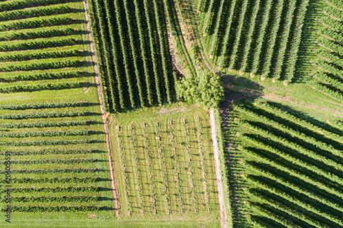 widok-winnic-z-gory-z-dronem-rolnictwo-w-valtellina