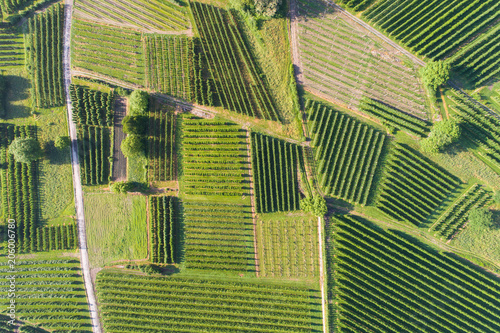 aerial-view-of-a-vineyard