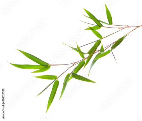 Fresh green bamboo branch with leaves  isolated on white background.