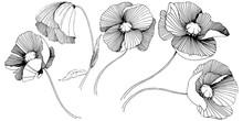 Vector Poppy. Floral Botanical...