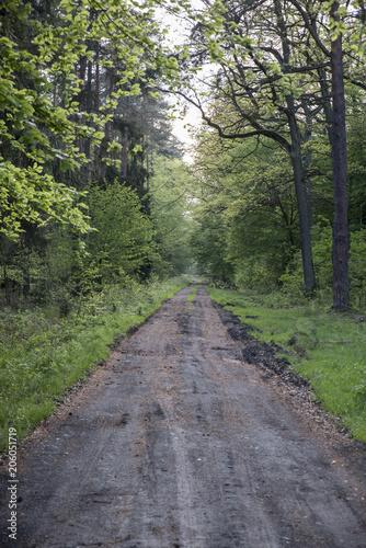 Staande foto Weg in bos droga przez las