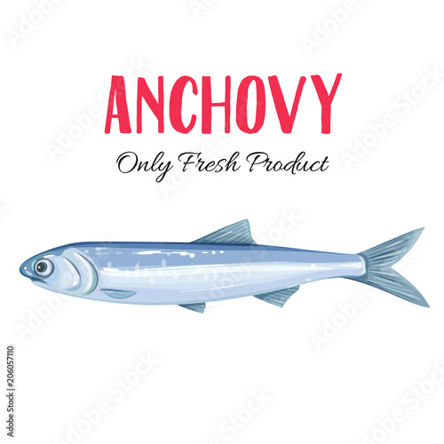 Vector anchovy. Canvas Print