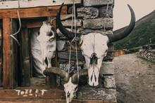 The Big Skulls Of Wild Horned ...