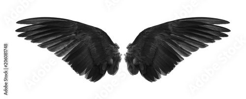 Foto  back of black wings isolated on white background