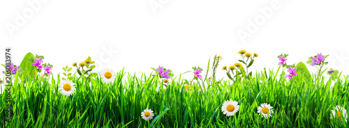 Poster Fleuriste grass and wild flowers background