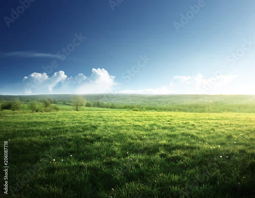 Foto auf Gartenposter Landschappen spring sunset and field of grass