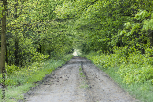 Tuinposter Weg in bos leśna dróżka
