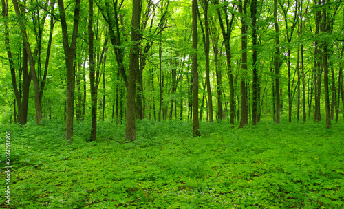 Garden Poster Forest Forest trees in spring