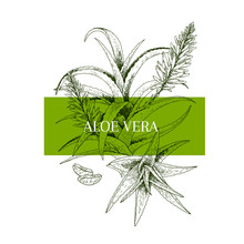 Hand Drawn Aloe Vera Branch An...