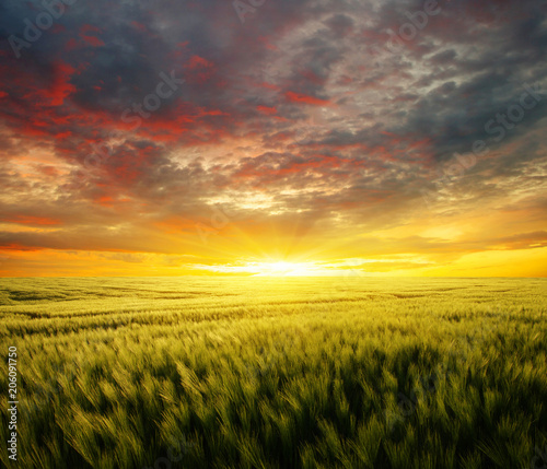 Fotobehang Meloen Sunset on the wheat