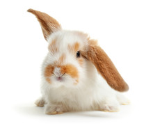Cute Fluffy Bunny On White Background