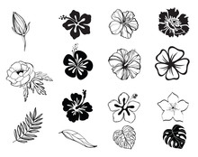 Silhouettes Of Flowers Black And White Isolated