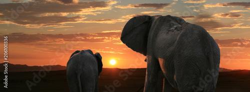 Staande foto Afrika Afrikanische Elefanten vor Sonnenuntergang
