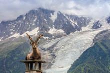 Ibex, Range Of Mont Blanc, Fra...