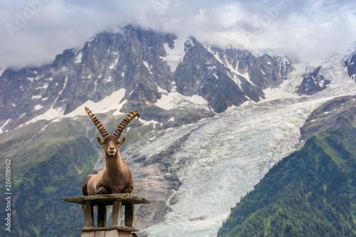 Ibex, Range of Mont Blanc, France
