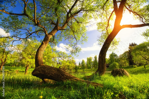 Staande foto Tuin Summer vibrant landscape