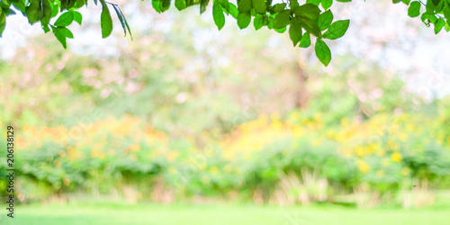 Fotografiet  Blurred spring and summer nature outdoor background, Blur green park background